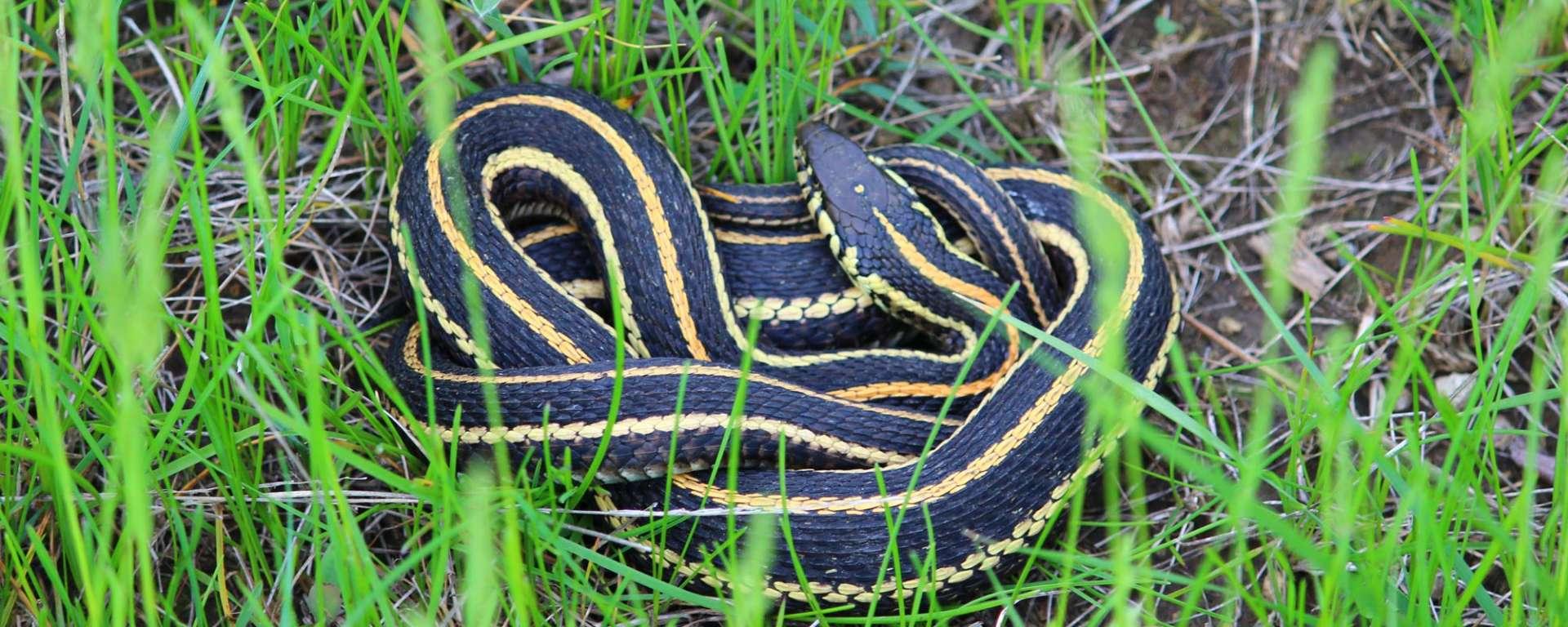 snakes control in kenya