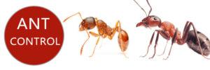 ants control in kenya