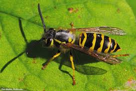 Bees Control services in kenya