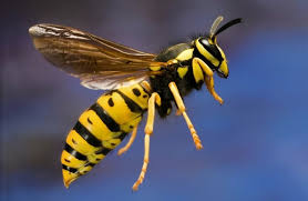 Pest Control and Fumigation Services in kenya