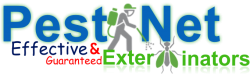 PEST NET EXTERMINATORS. Trusted, Reliable and Guaranteed Pest Control and Fumigation services in Kenya