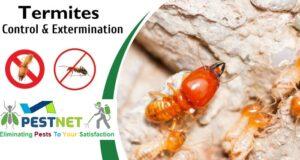 termite control companies in kenya